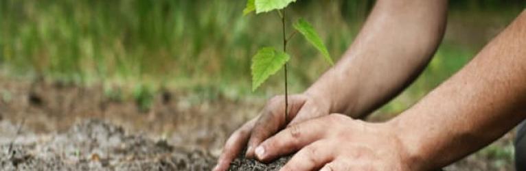 Une seconde plantation d'arbres pour Éco Cuisine Design<br>
